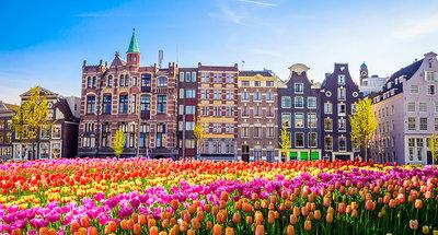 Tulip fields in Amsterdam