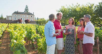 Vineyard in Burgundy