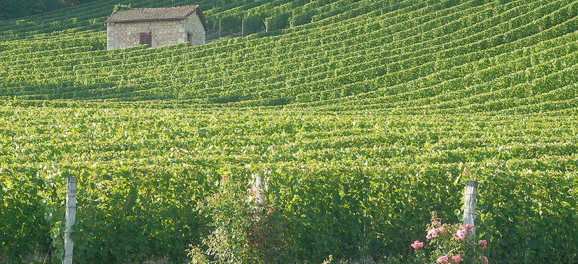Vineyards, Burgundy: Nivernais & Loire